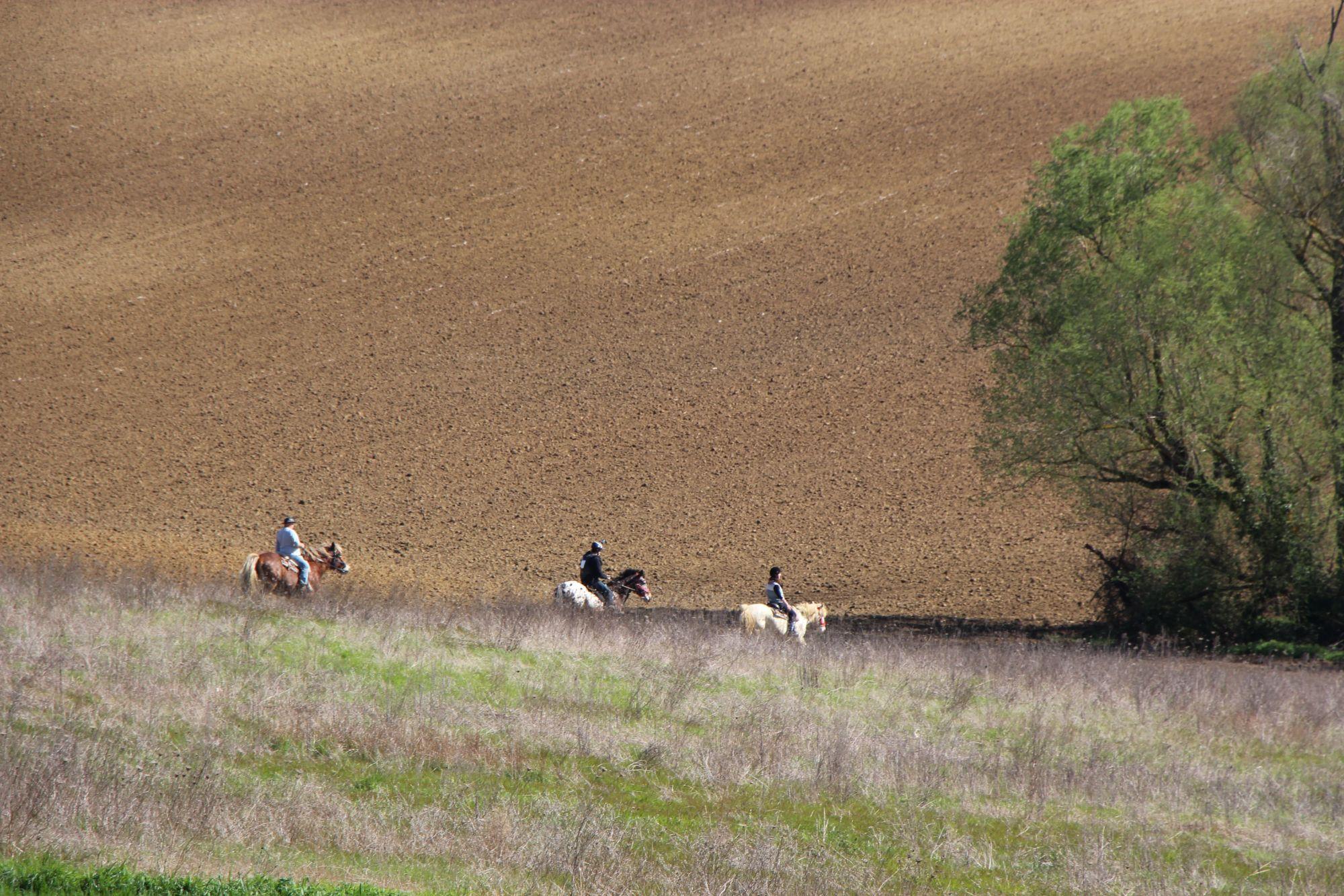 Chevaux et champs