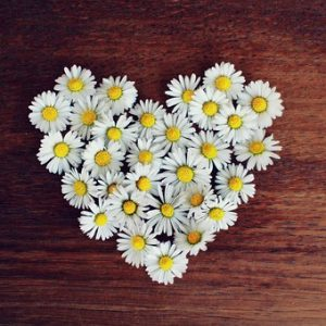 daisy-1403041__340