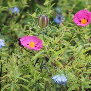 Jardin des Couleurs du Vent au printemps