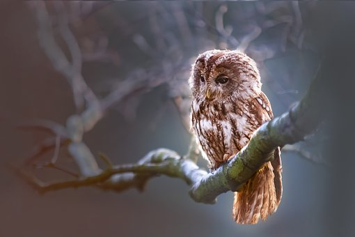 owl-1834152__340