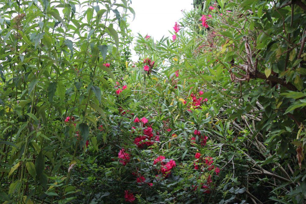 Jardin des Couleurs du Vent en été
