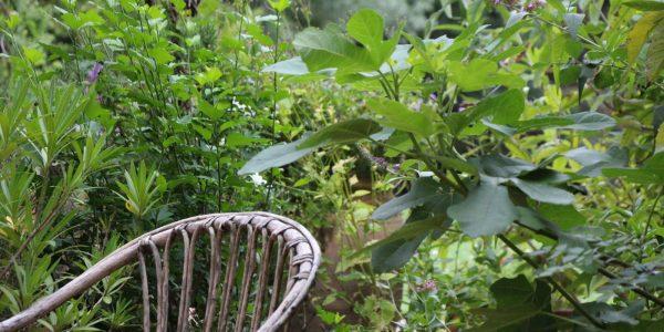 Végétation luxuriante