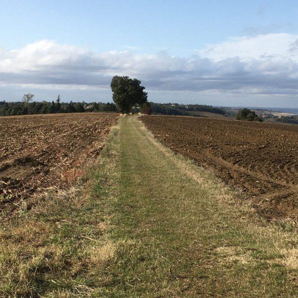 Randonnée Route des Crêtes de Clermont-le-Fort