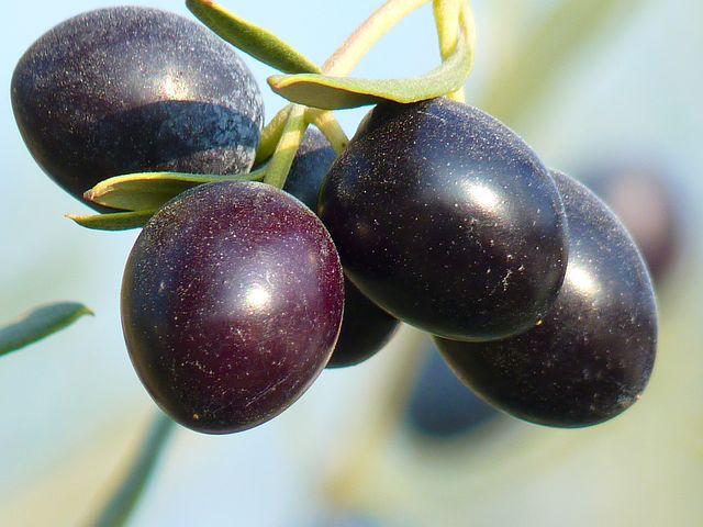 olives-15016__480